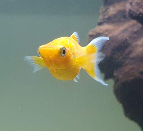 Die neuen Haustiere – Fische im Aquarium