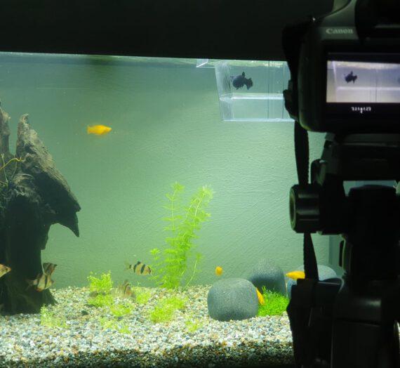 für Einsteiger – Das kostet ein Aquarium